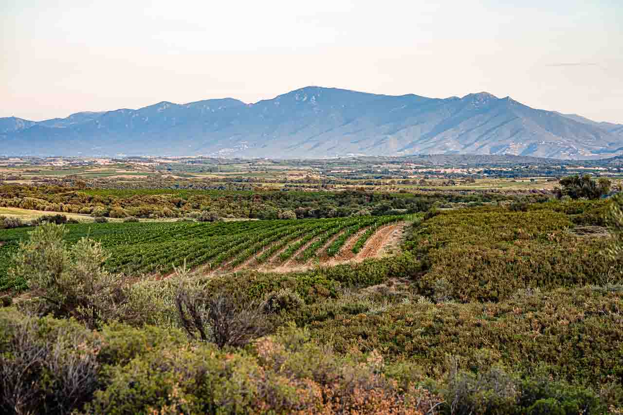 Photo d'un paysage catalan prise près de Perpignan à Sainte Colombe de la Commanderie