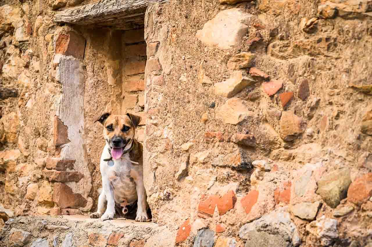 Portrait du chien de famille lors d'un shooting photo avec les enfants près de Perpignan 66